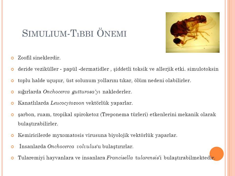 S IMULIUM -T ıBBI Ö NEMI Zoofil sineklerdir. deride veziküller - papül -dermatidler, şiddetli toksik ve allerjik etki. simulotoksin toplu halde uçuşur