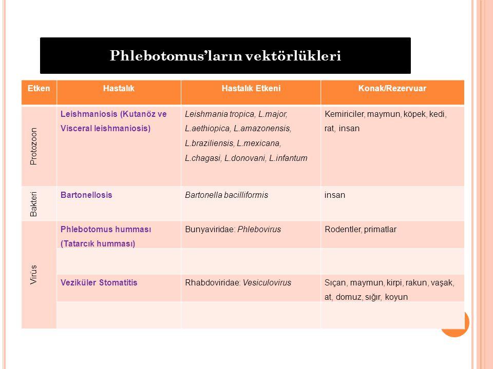 EtkenHastalıkHastalık EtkeniKonak/Rezervuar Protozoon Leishmaniosis (Kutanöz ve Visceral leishmaniosis) Leishmania tropica, L.major, L.aethiopica, L.a