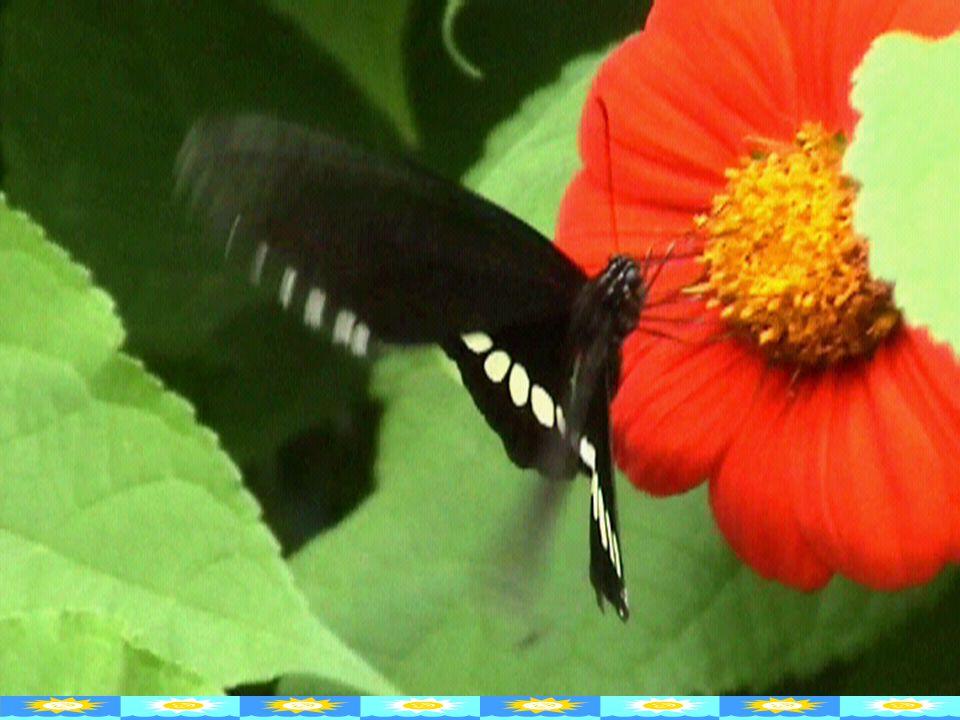 Çanak yaprak Erkek organ Dişi organ Taç yaprak Çiçek sapı Gövde Yaprak Kök