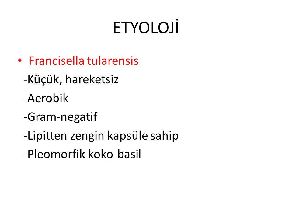ETYOLOJİ Francisella tularensis -Küçük, hareketsiz -Aerobik -Gram-negatif -Lipitten zengin kapsüle sahip -Pleomorfik koko-basil