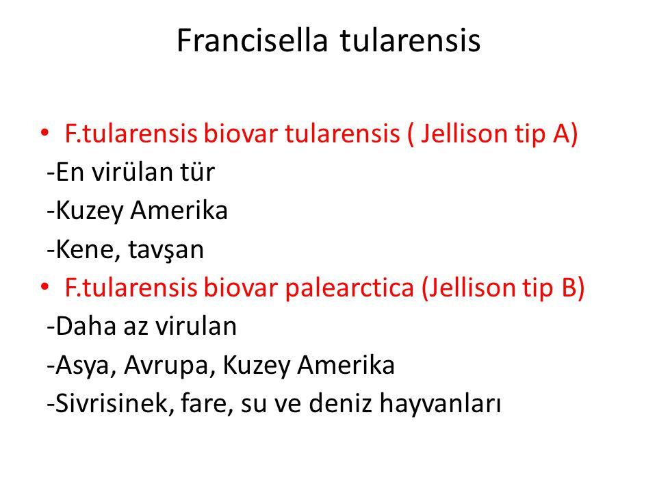 Francisella tularensis F.tularensis biovar tularensis ( Jellison tip A) -En virülan tür -Kuzey Amerika -Kene, tavşan F.tularensis biovar palearctica (Jellison tip B) -Daha az virulan -Asya, Avrupa, Kuzey Amerika -Sivrisinek, fare, su ve deniz hayvanları