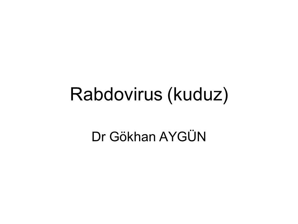 Tanı Viral antijen (beyin dokusu, deri sinirleri) (immunufloresans) Virus izolasyonu(Hücre kültürü, infant fareler) Serolojik testler PCR Sitoplazma içinde viral nükleokapsidlerden oluşan inklüzyon : Negri cisimciği