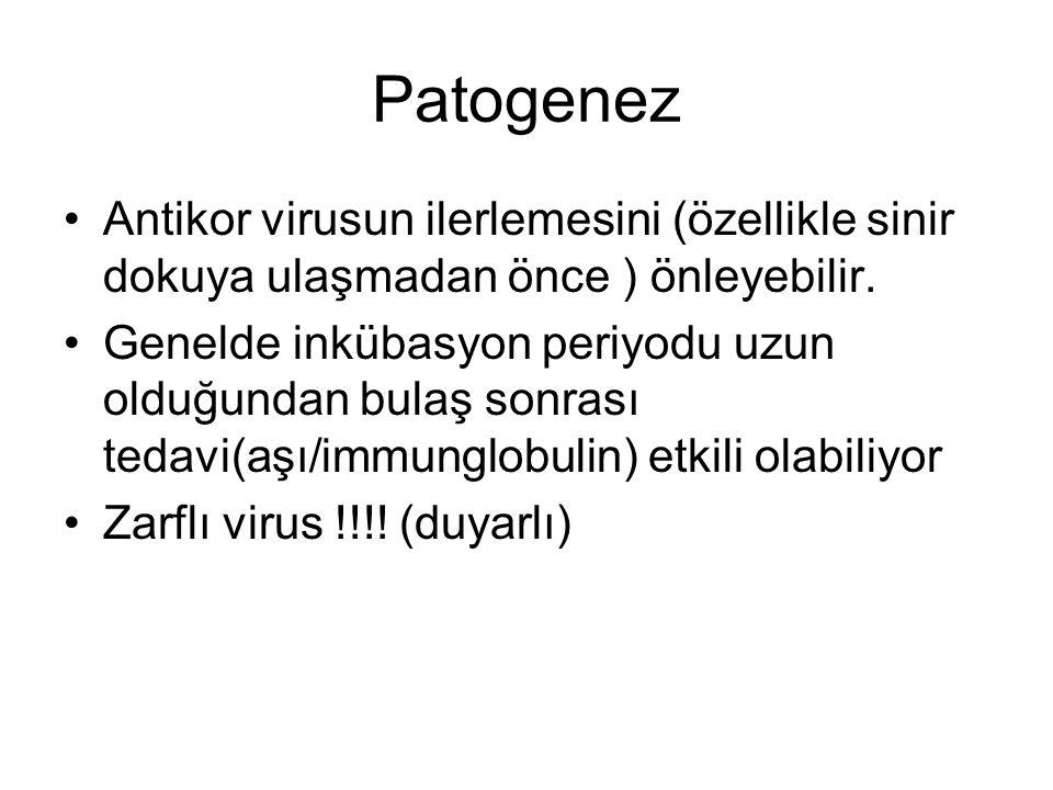 Patogenez Antikor virusun ilerlemesini (özellikle sinir dokuya ulaşmadan önce ) önleyebilir. Genelde inkübasyon periyodu uzun olduğundan bulaş sonrası