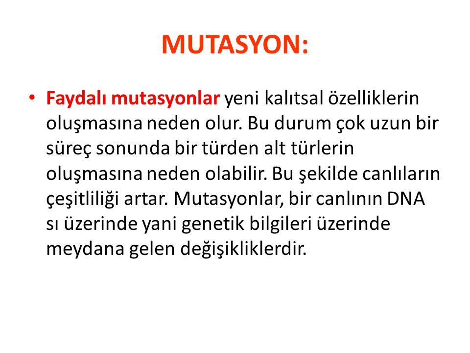 MUTASYON: Faydalı mutasyonlar yeni kalıtsal özelliklerin oluşmasına neden olur. Bu durum çok uzun bir süreç sonunda bir türden alt türlerin oluşmasına