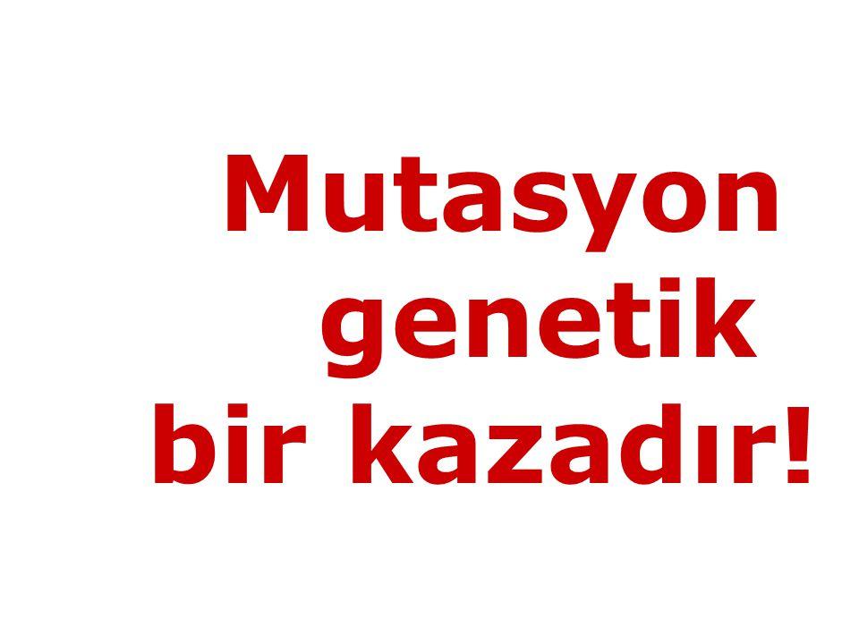 Mutasyon genetik bir kazadır!
