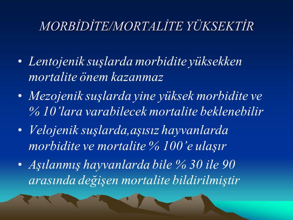 MORBİDİTE/MORTALİTE YÜKSEKTİR Lentojenik suşlarda morbidite yüksekken mortalite önem kazanmaz Mezojenik suşlarda yine yüksek morbidite ve % 10'lara va