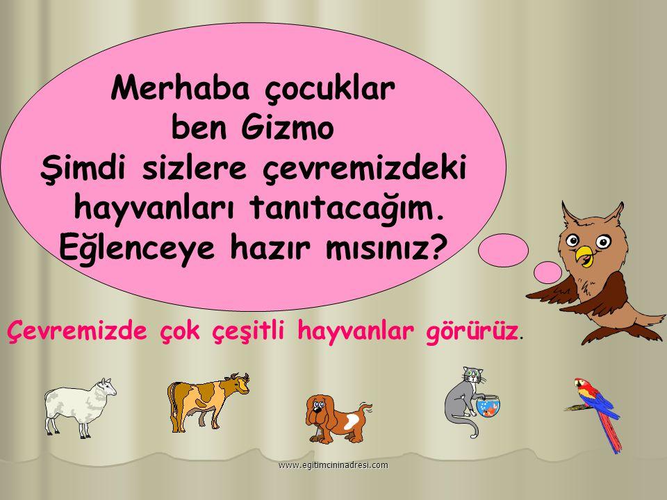 Canlılar Nasıl Beslenir ? www.egitimcininadresi.com