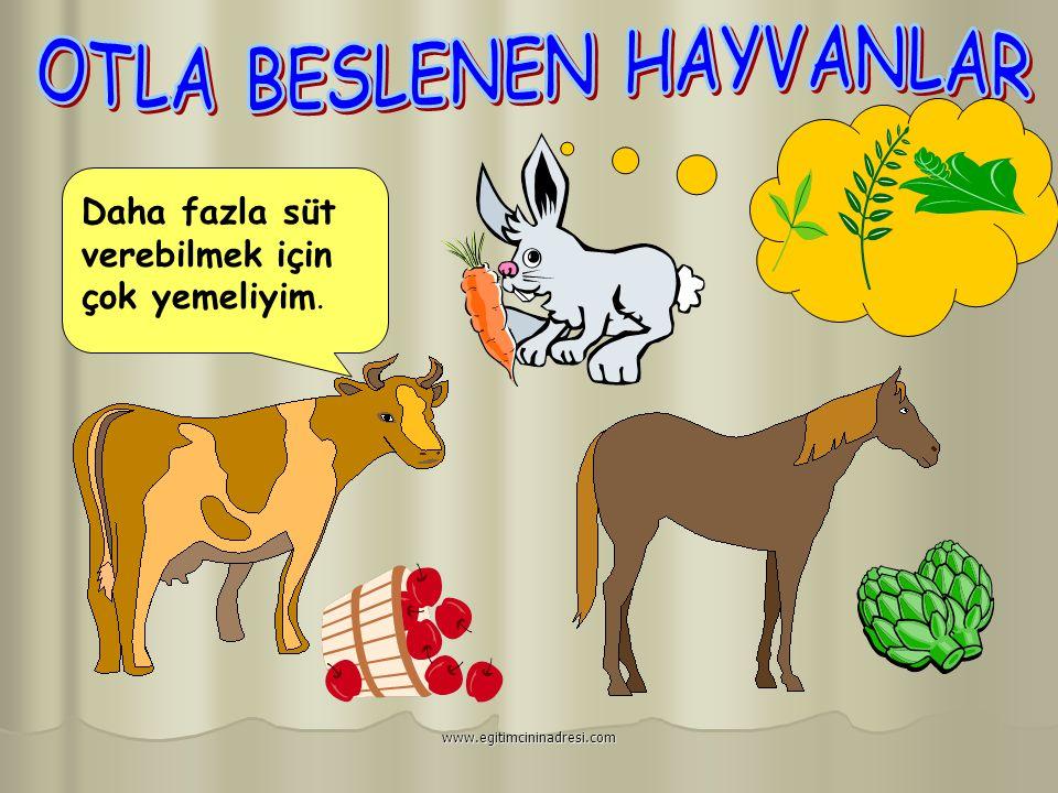  Hayvanlar üç şekilde beslenirler. www.egitimcininadresi.com