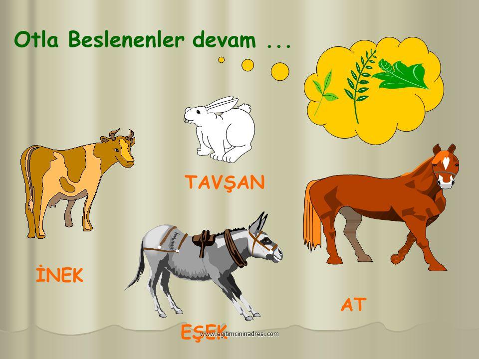 Daha fazla süt verebilmek için çok yemeliyim. www.egitimcininadresi.com