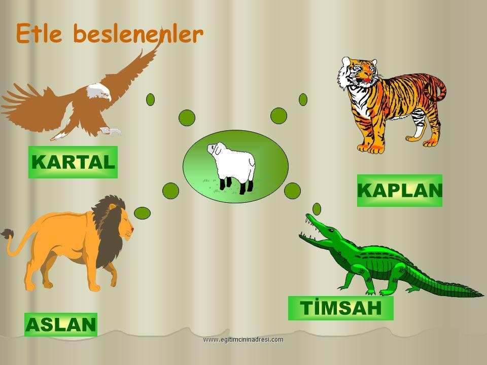 Otla Beslenenler devam... İNEK EŞEK AT TAVŞAN www.egitimcininadresi.com