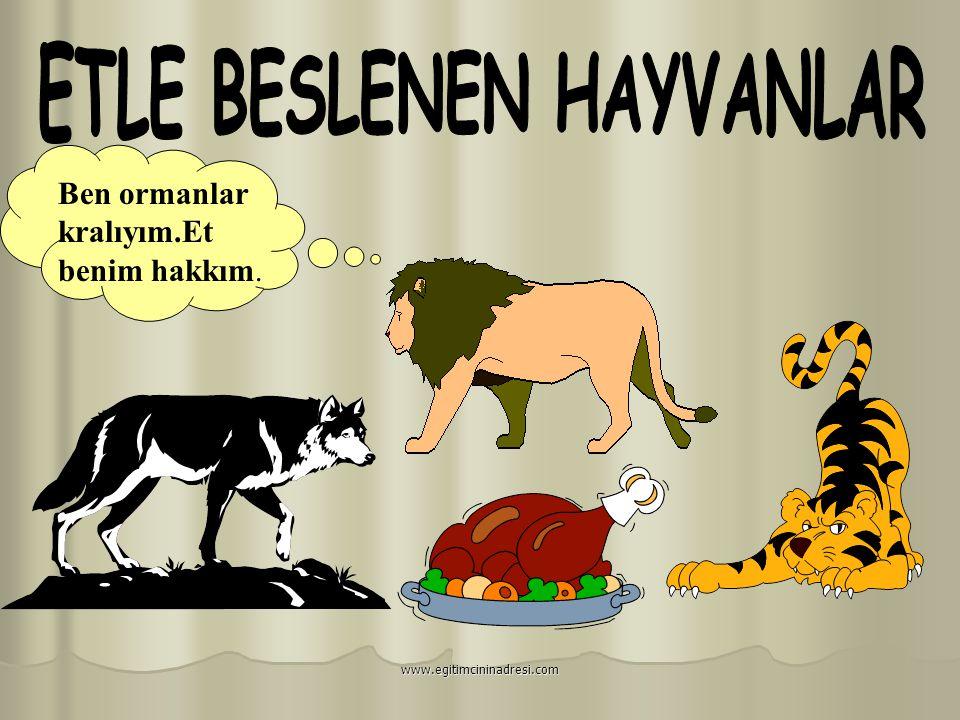 KARTAL KAPLAN ASLAN TİMSAH Etle beslenenler www.egitimcininadresi.com