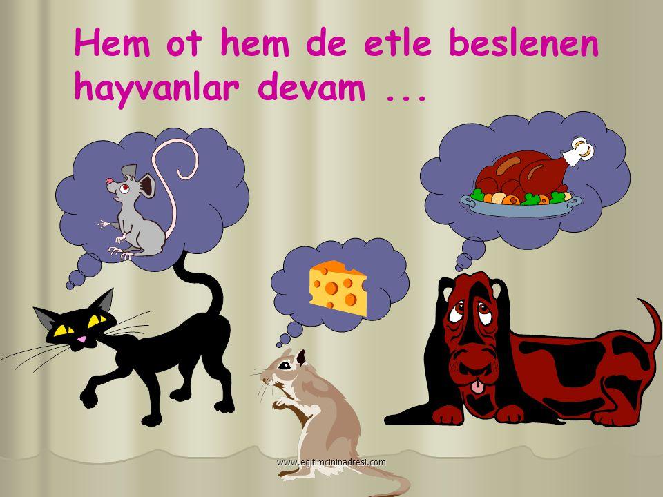 Hem Otla Hem Etle Beslenenler: AYI HOROZ ÖRDEK YILAN www.egitimcininadresi.com