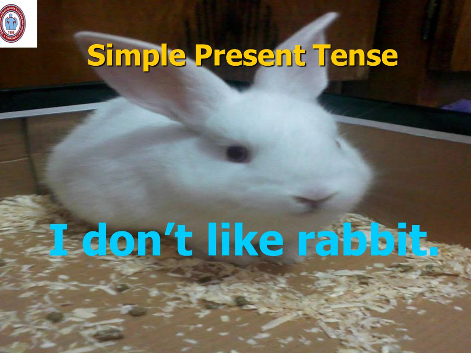 Simple Present Tense I don't like rabbit.