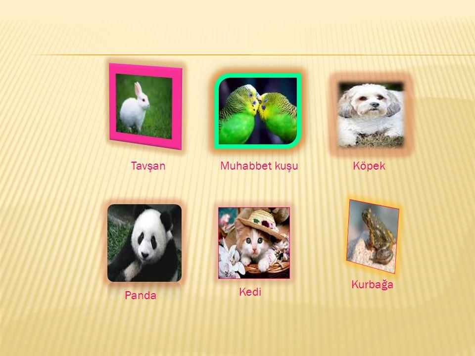 TavşanMuhabbet kuşuKöpek Panda Kedi Kurbağa