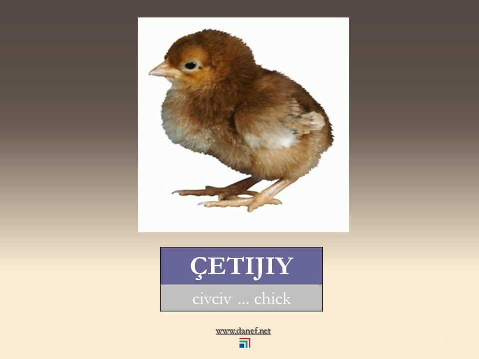 www.danef.net ÇET tavuk... hen 11