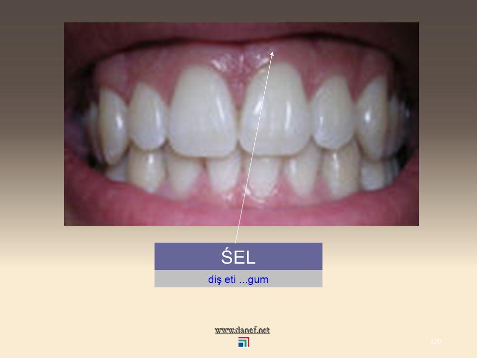www.danef.net ŚE diş...tooth 119