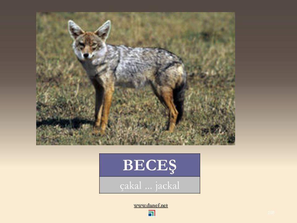 www.danef.net BACE tilki... fox 167