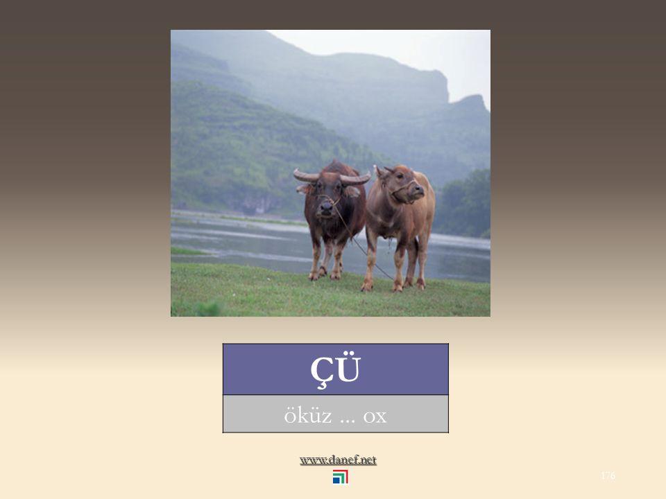 www.danef.net ÇIŠI oğlak... kid of a goat 175