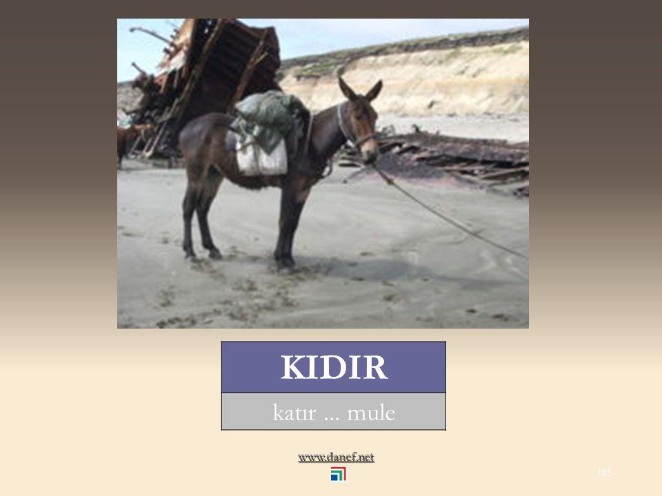 www.danef.net KALIRKAŞ yengeç... crab 184