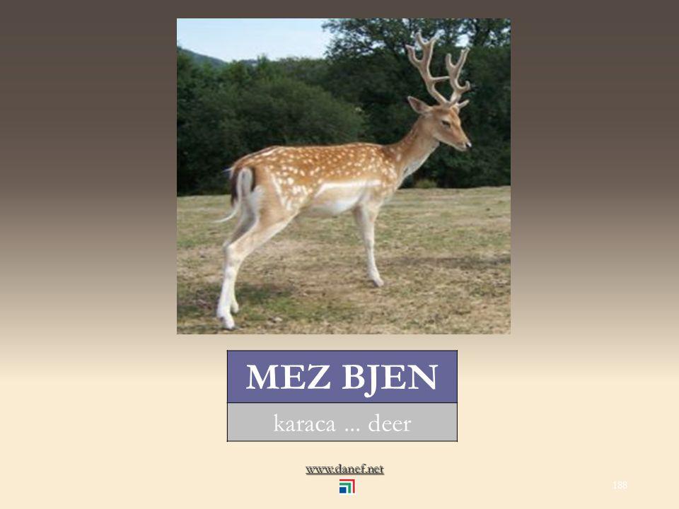 www.danef.net MA Ḣ ÇE deve... camel 187