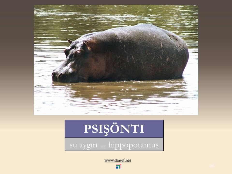 www.danef.net PSIÇÜ manda... water buffalo 191