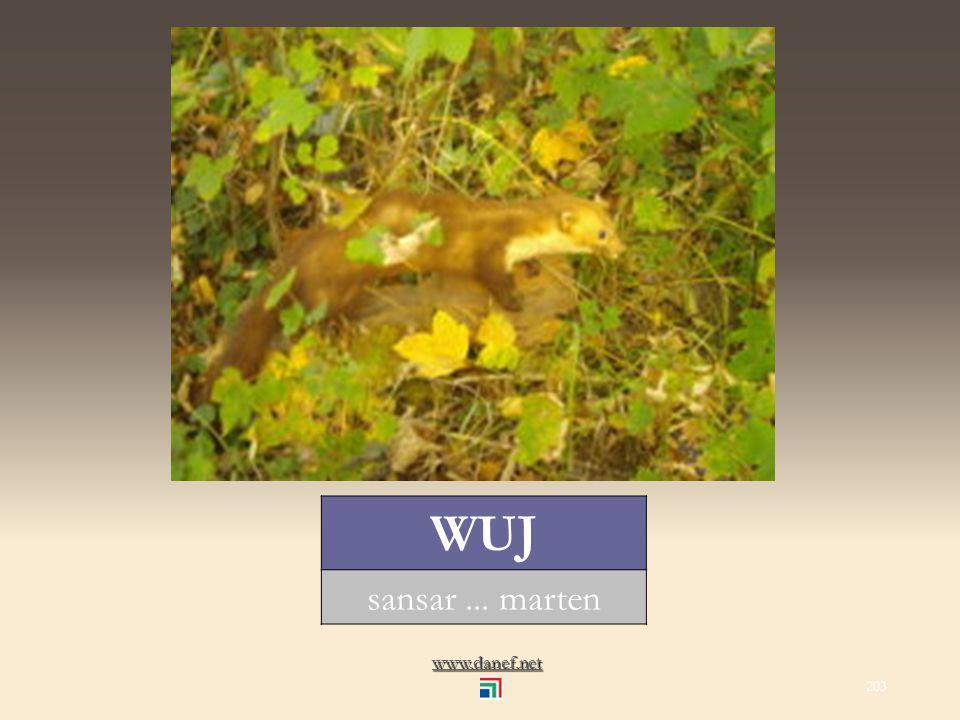 www.danef.net ŚIĞO fare... mouse 202