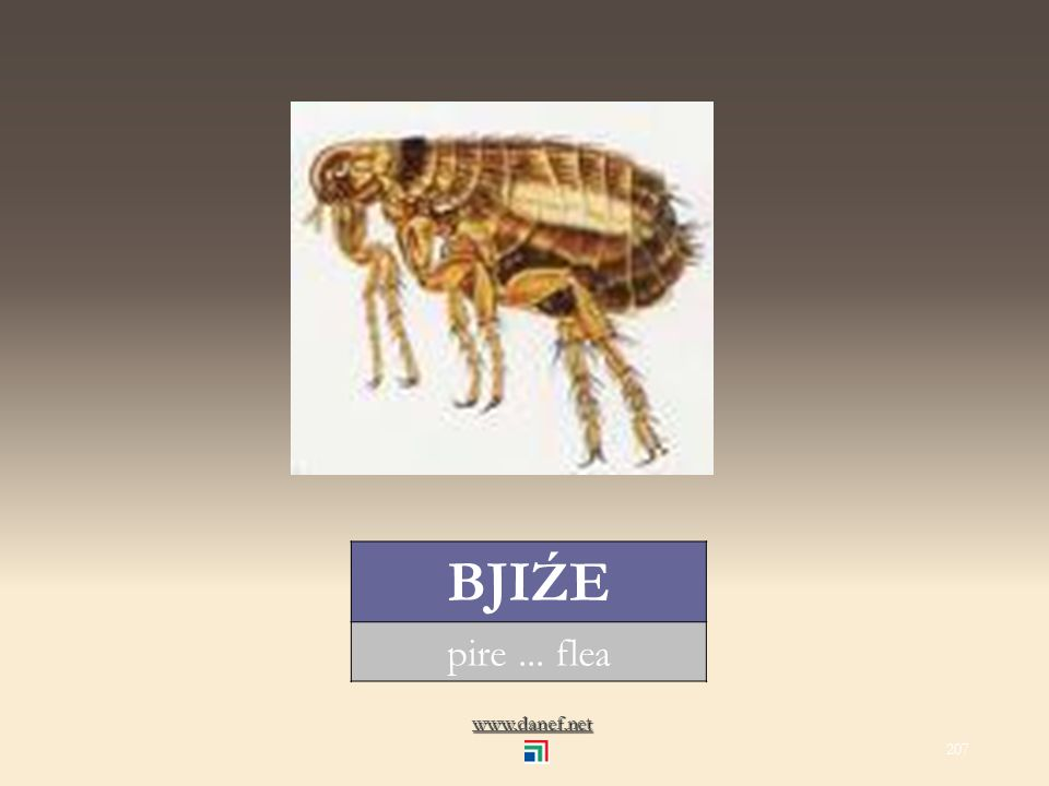 www.danef.net BECI Ḣ örümcek... spider 206