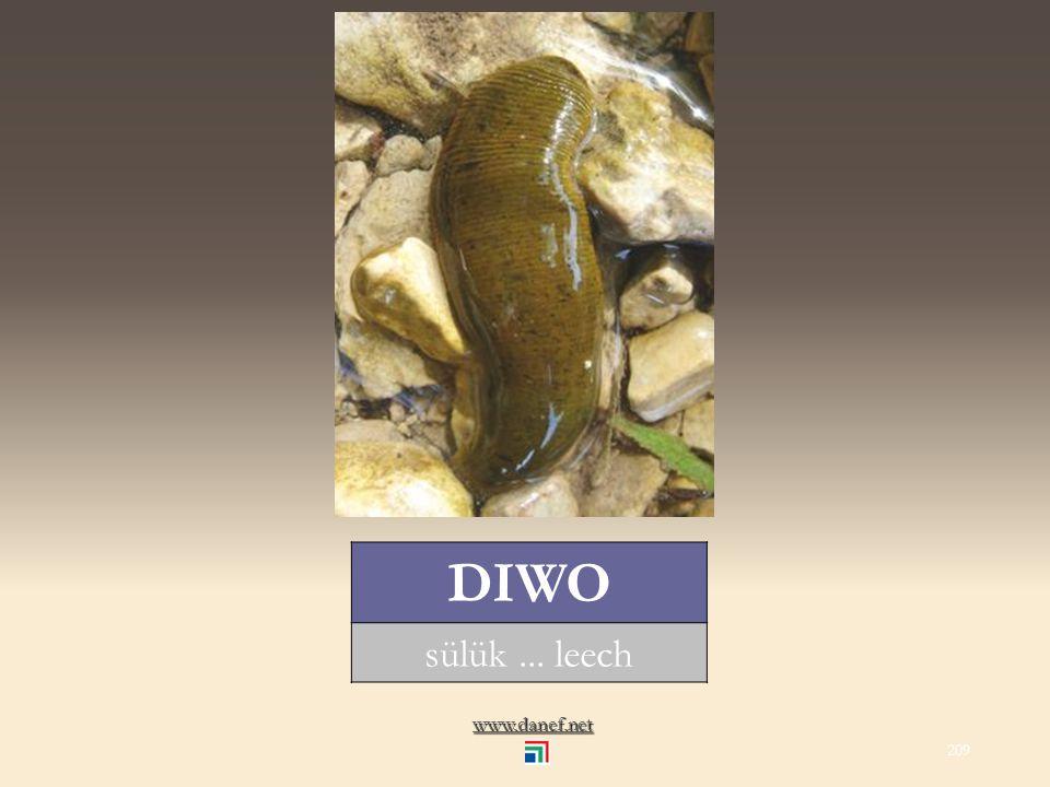 www.danef.net ĆEĞEŞIĞ akrep... scorpion 208