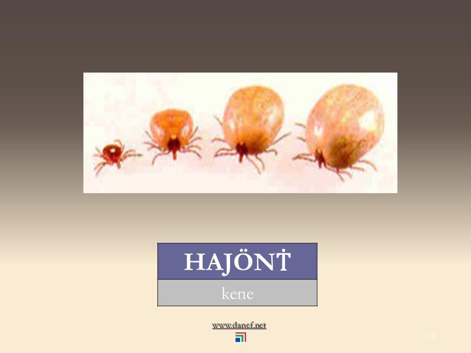 www.danef.net DIWO sülük... leech 209