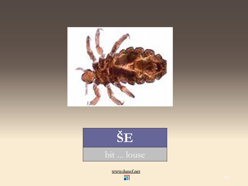 www.danef.net ŞÖM Ṕ EJ hamam böceği... cockroach 214