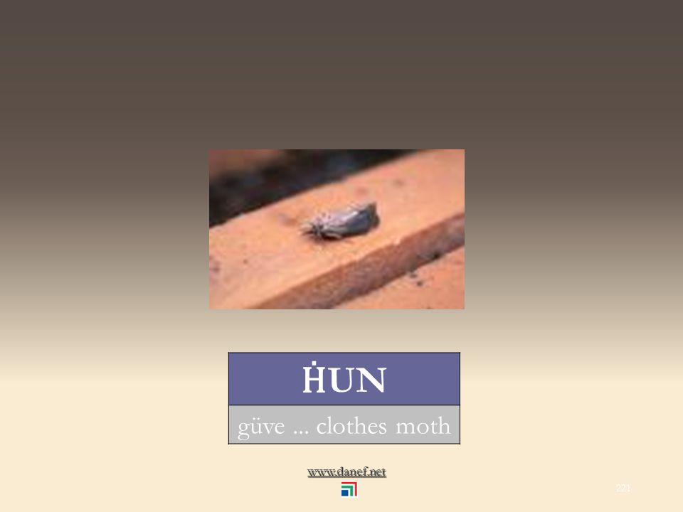 www.danef.net CINEP Ḣ OTER midye... mussel 220