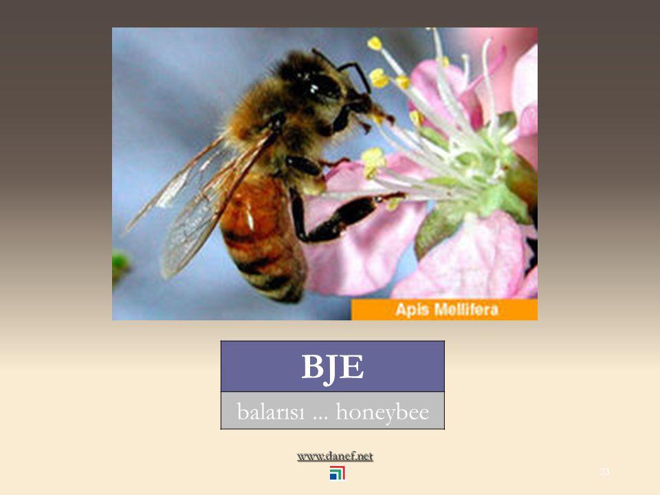 www.danef.net BAŹE sinek... fly 22
