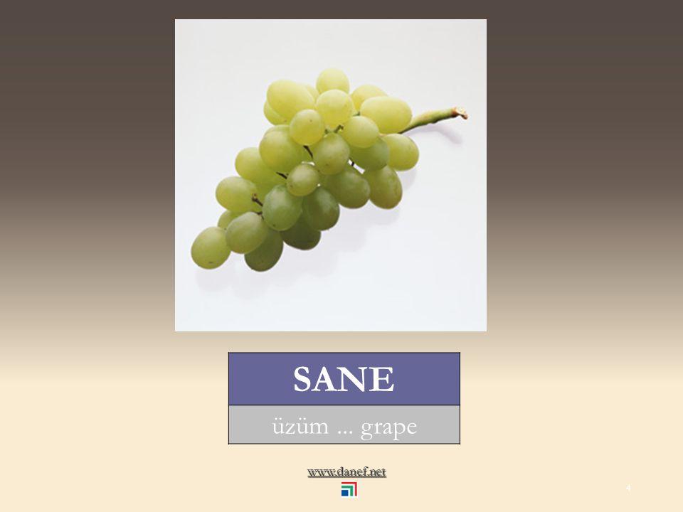 www.danef.net NAŞE kavun... muskmelon 3