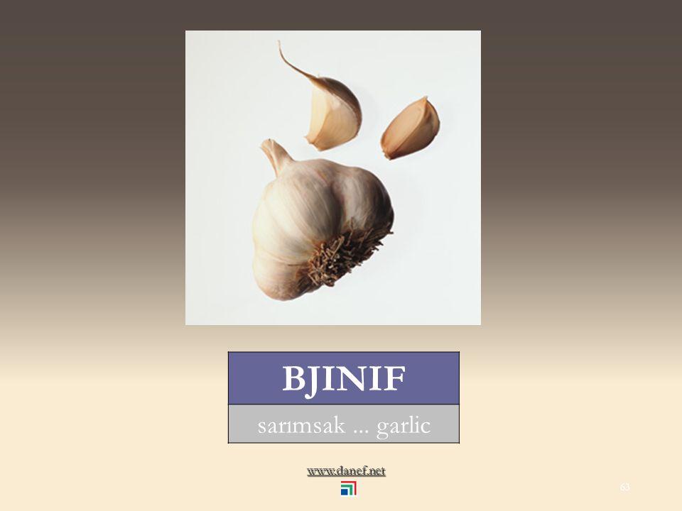 www.danef.net NATIF mısır... corn 62