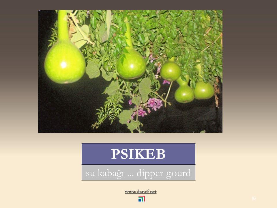 www.danef.net PḢIPḢI havuç... carrot 82