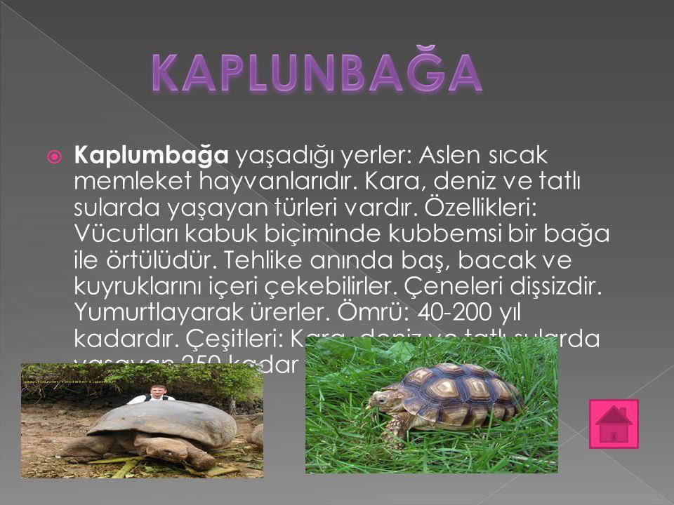  Kaplumbağa yaşadığı yerler: Aslen sıcak memleket hayvanlarıdır. Kara, deniz ve tatlı sularda yaşayan türleri vardır. Özellikleri: Vücutları kabuk bi