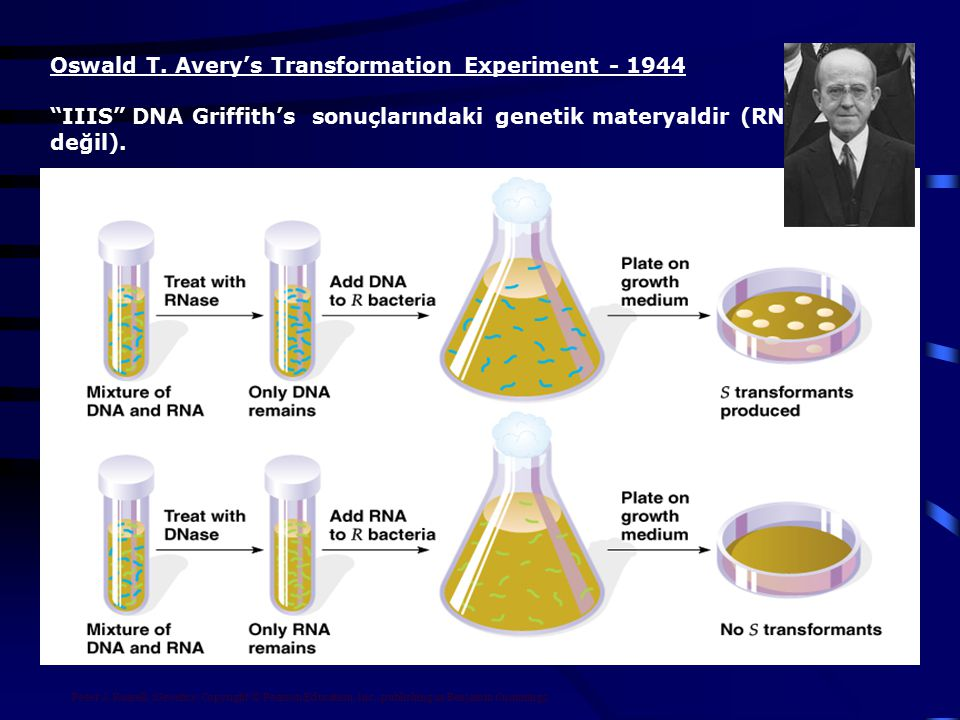 Peter J. Russell, iGenetics: Copyright © Pearson Education, Inc., publishing as Benjamin Cummings. Oswald T. Avery's Transformation Experiment - 1944