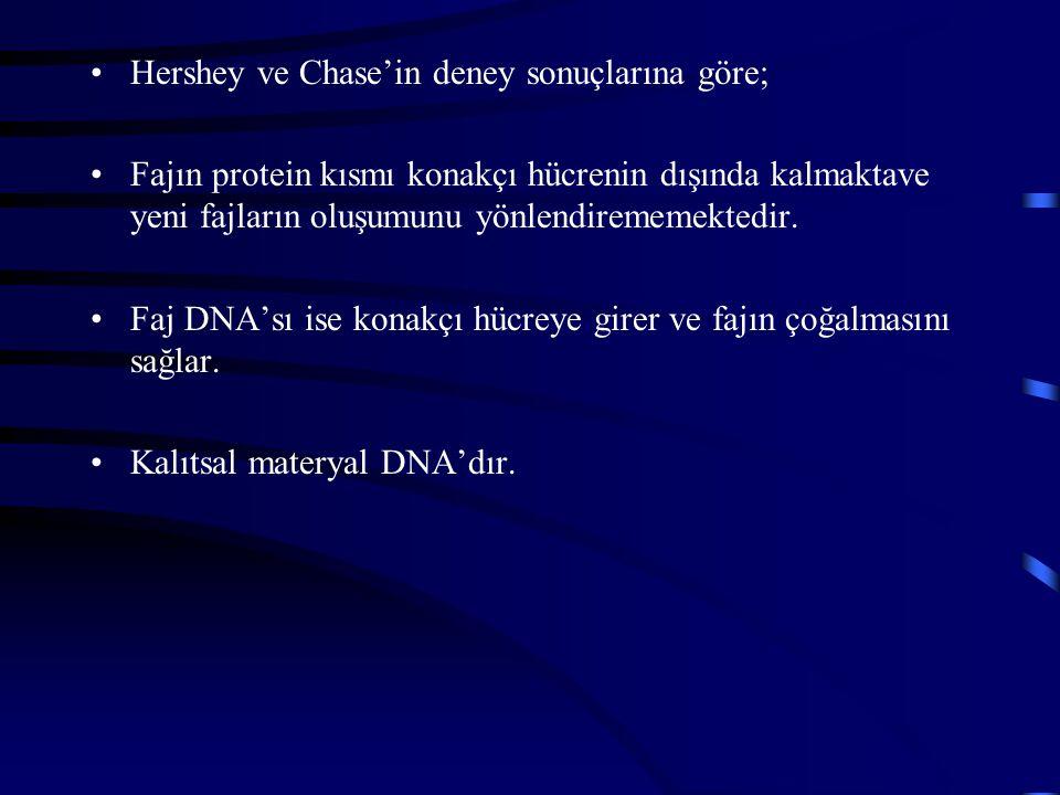 Hershey ve Chase'in deney sonuçlarına göre; Fajın protein kısmı konakçı hücrenin dışında kalmaktave yeni fajların oluşumunu yönlendirememektedir. Faj