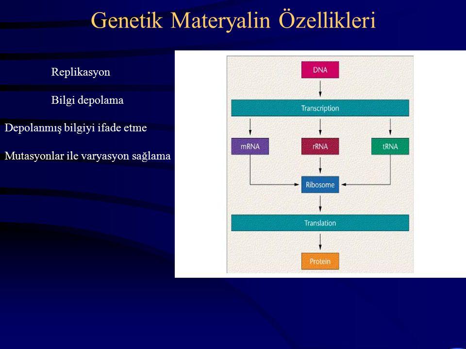 Genetik Materyalin Özellikleri Replikasyon Bilgi depolama Depolanmış bilgiyi ifade etme Mutasyonlar ile varyasyon sağlama