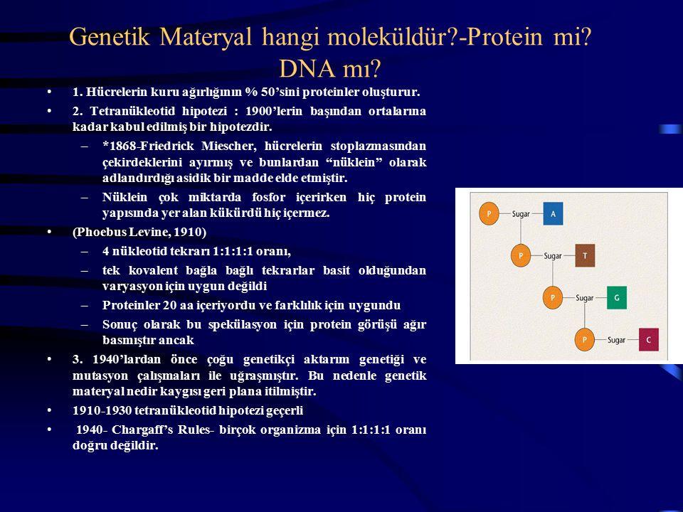 Genetik Materyal hangi moleküldür?-Protein mi? DNA mı? 1. Hücrelerin kuru ağırlığının % 50'sini proteinler oluşturur. 2. Tetranükleotid hipotezi : 190