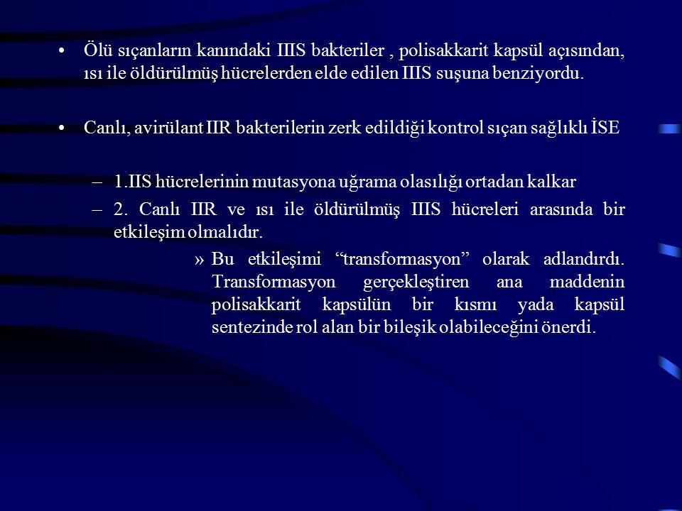 Ölü sıçanların kanındaki IIIS bakteriler, polisakkarit kapsül açısından, ısı ile öldürülmüş hücrelerden elde edilen IIIS suşuna benziyordu. Canlı, avi