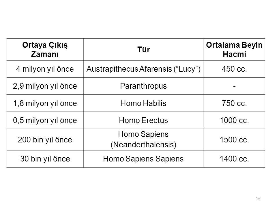 """Ortaya Çıkış Zamanı Tür Ortalama Beyin Hacmi 4 milyon yıl önceAustrapithecus Afarensis (""""Lucy"""")450 cc. 2,9 milyon yıl önceParanthropus- 1,8 milyon yıl"""