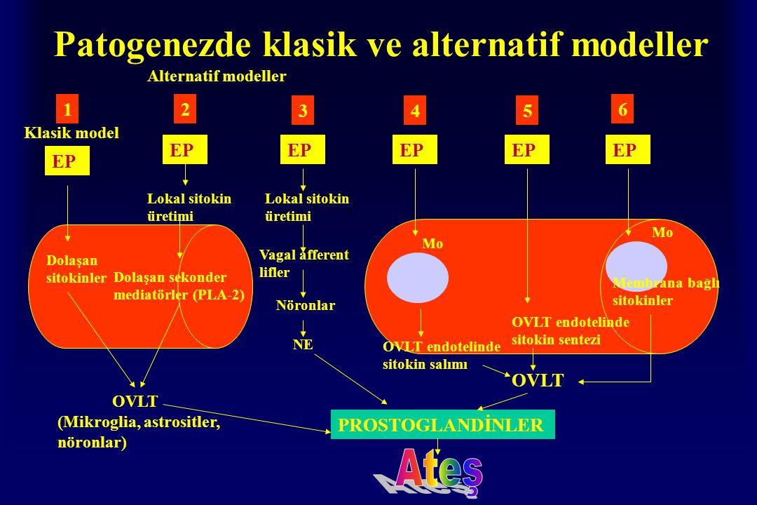 Patogenezde klasik ve alternatif modeller 12 345 6 Klasik model EP Dolaşan sitokinler OVLT (Mikroglia, astrositler, nöronlar) Alternatif modeller EP Lokal sitokin üretimi Dolaşan sekonder mediatörler (PLA-2) Lokal sitokin üretimi Vagal afferent lifler Nöronlar NE PROSTOGLANDİNLER Mo OVLT endotelinde sitokin salımı OVLT OVLT endotelinde sitokin sentezi EP Mo Membrana bağlı sitokinler
