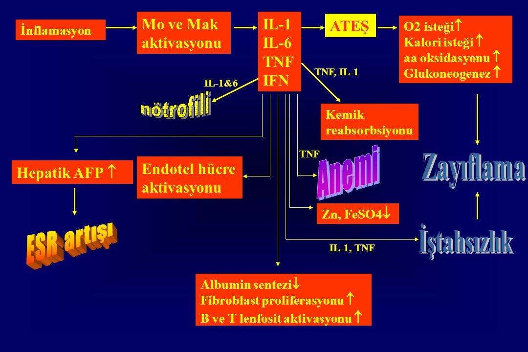 İnflamasyon Mo ve Mak aktivasyonu IL-1 IL-6 TNF IFN ATEŞ O2 isteği  Kalori isteği  aa oksidasyonu  Glukoneogenez  Hepatik AFP  Endotel hücre aktivasyonu Albumin sentezi  Fibroblast proliferasyonu  B ve T lenfosit aktivasyonu  Kemik reabsorbsiyonu Zn, FeSO4  IL-1, TNF TNF TNF, IL-1 IL-1&6