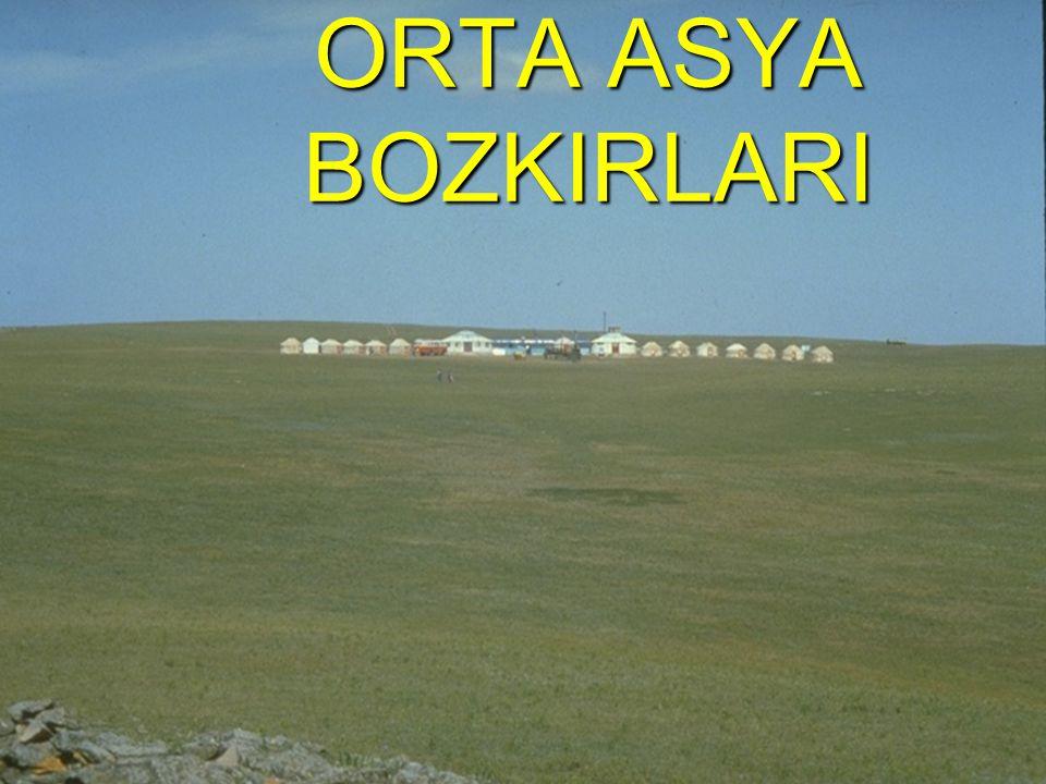 ORTA ASYA BOZKIRLARI
