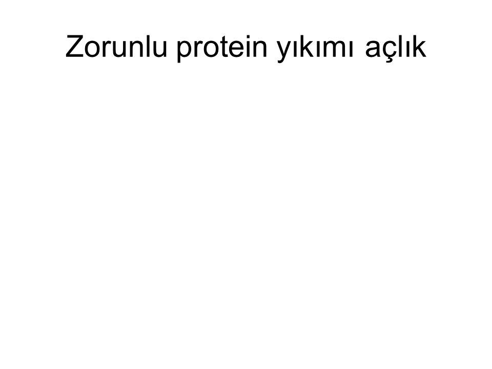 Zorunlu protein yıkımı açlık