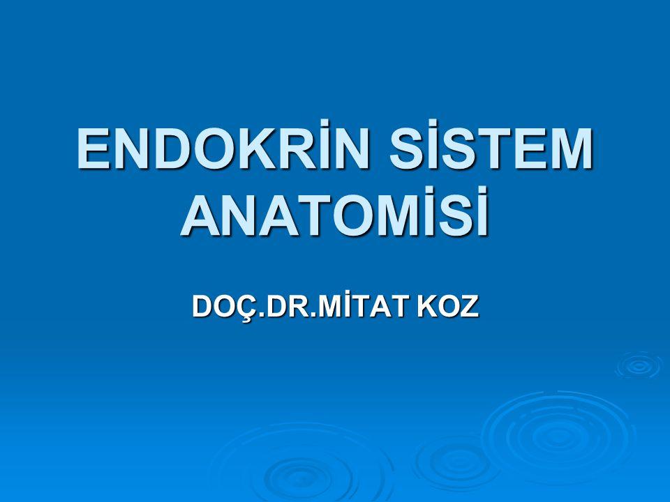 ENDOKRİN SİSTEM ANATOMİSİ DOÇ.DR.MİTAT KOZ
