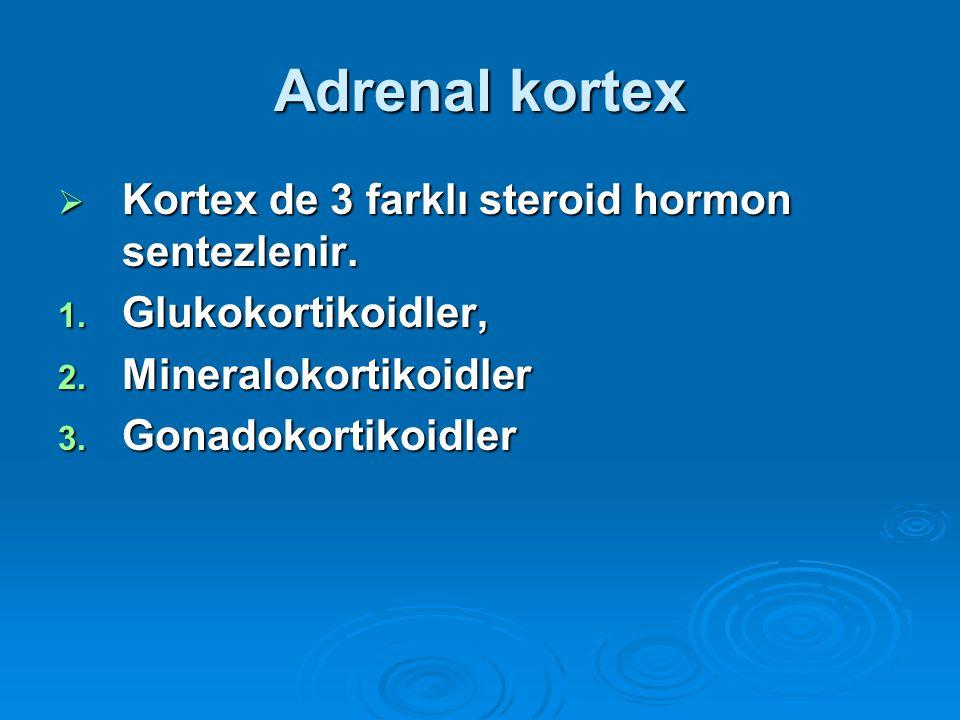 Adrenal kortex  Kortex de 3 farklı steroid hormon sentezlenir. 1. Glukokortikoidler, 2. Mineralokortikoidler 3. Gonadokortikoidler