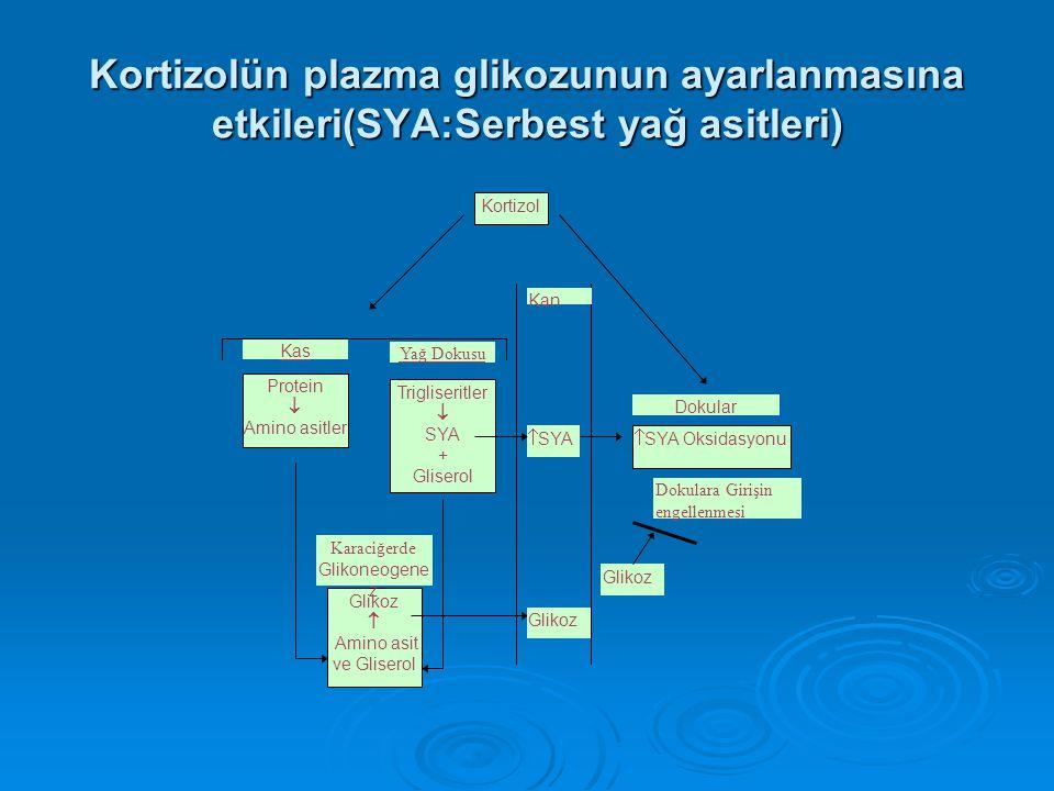 Kortizolün plazma glikozunun ayarlanmasına etkileri(SYA:Serbest yağ asitleri) Trigliseritler  SYA + Gliserol Yağ Dokusu Kortizol Protein  Amino asit