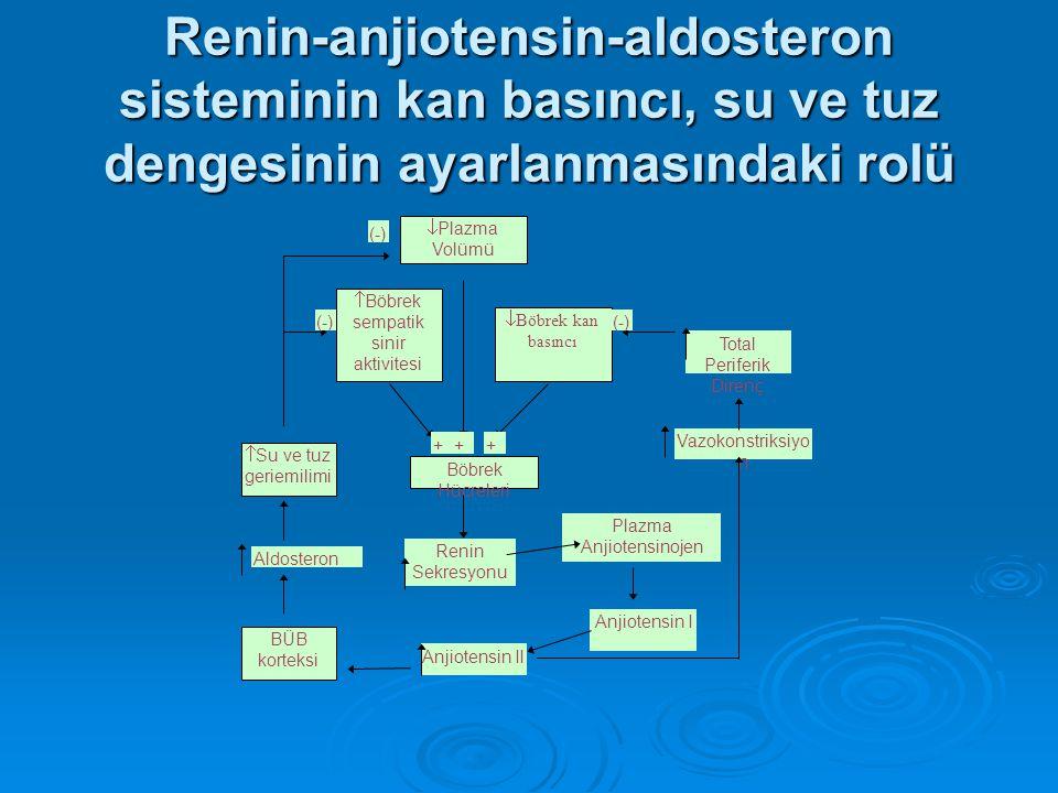 Renin-anjiotensin-aldosteron sisteminin kan basıncı, su ve tuz dengesinin ayarlanmasındaki rolü  Plazma Volümü  Böbrek kan basıncı  Böbrek sempatik